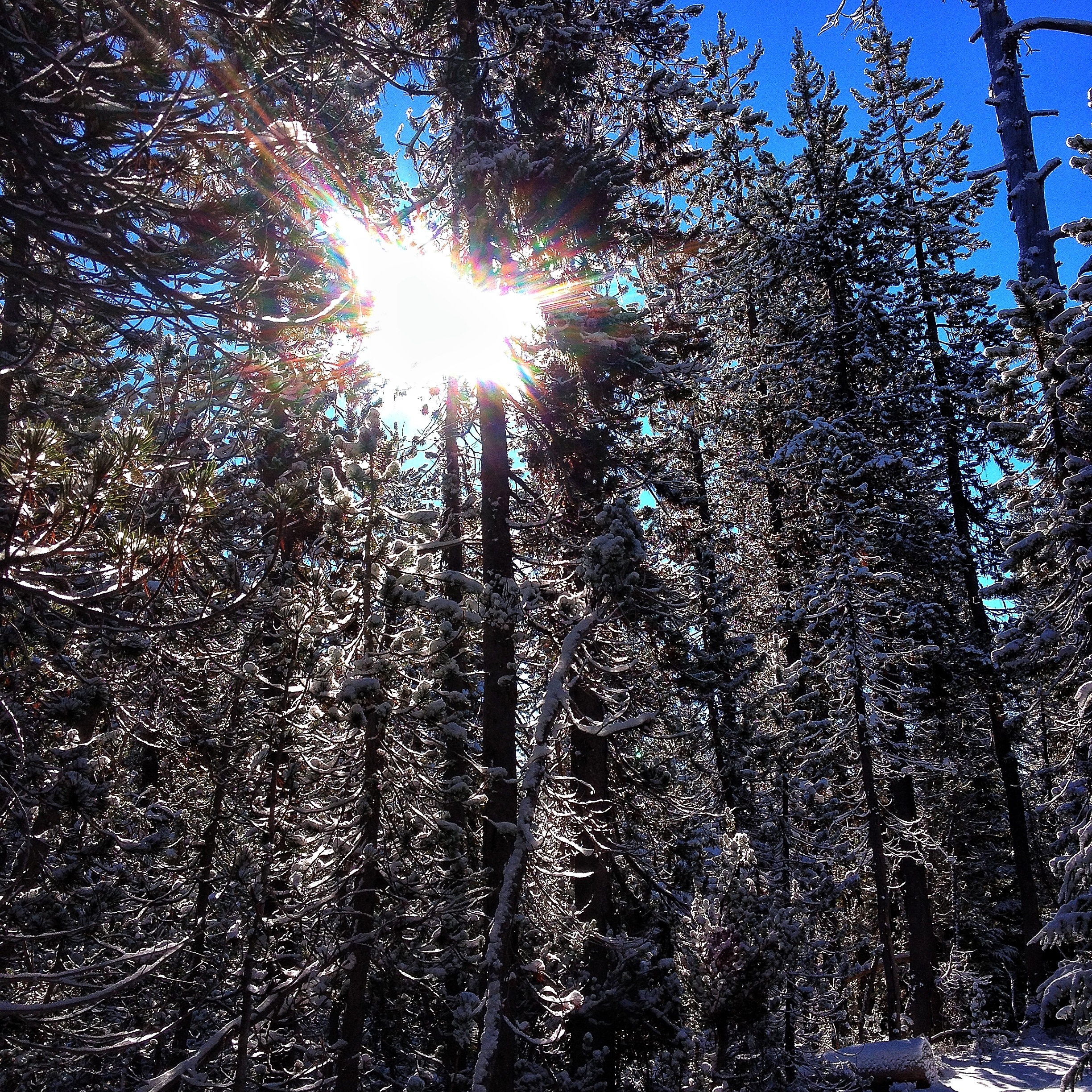 Sun shining through the moss, pines and snow.