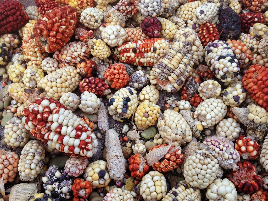 Maize comes in a lot of different forms - just like the papas