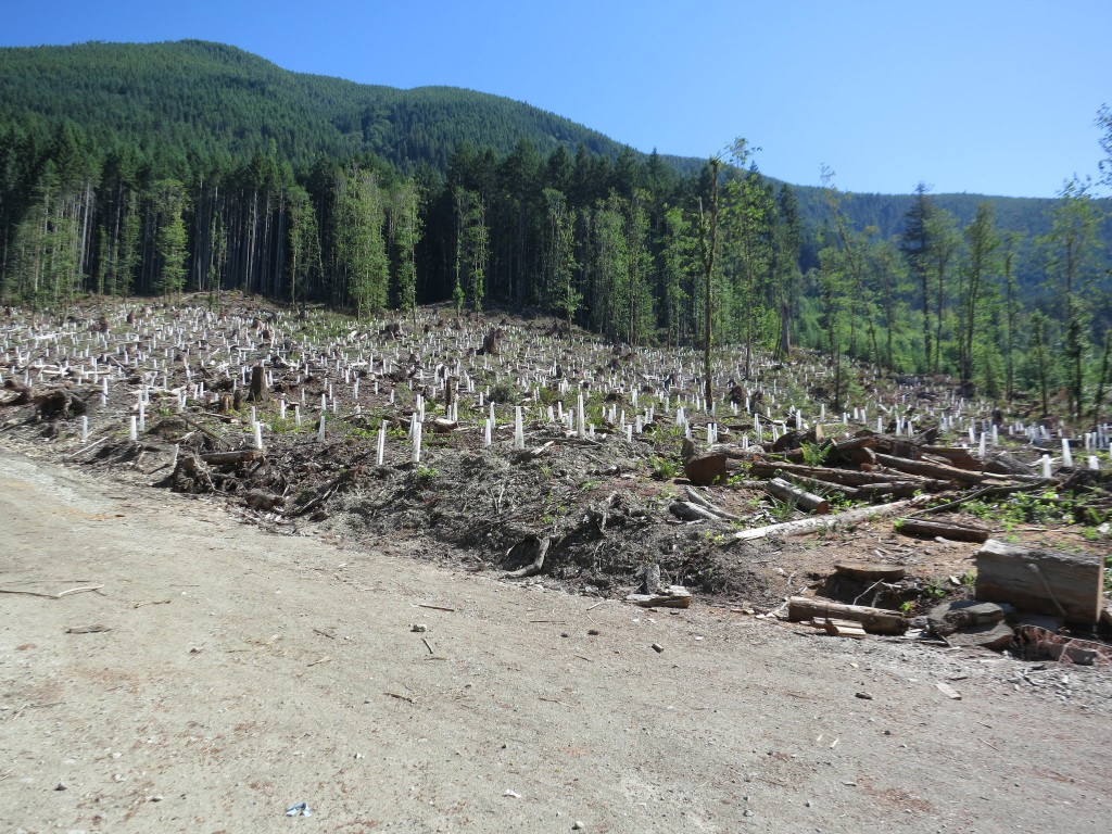 Clearcuts and new growth
