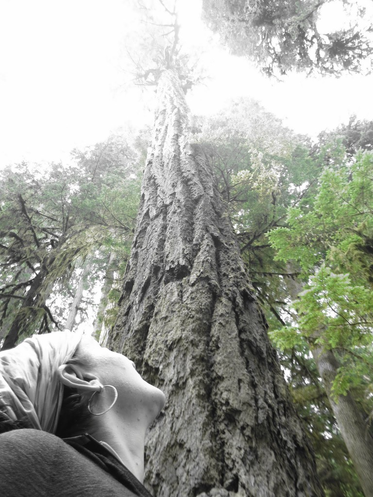 Slightly in awe of this old growth